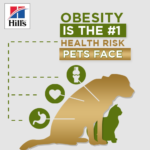 October is Pet Obesity Month